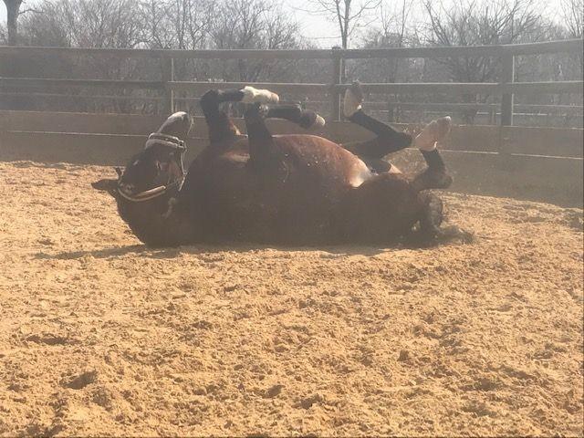 LaVida - Blog zu Themen der Pferdefütterung und Pferdegesundheit